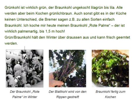 Ernte von Braunkohl mit Bildernder Pflanze im Schnee, bei der Ernte und fertig zum Kochen